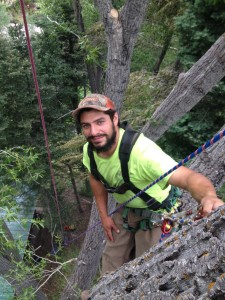 Arborist Anthony Alvarez